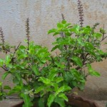 Fosforo: le 10 migliori fonti vegetali