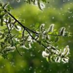 Allergie ai pollini: ecco i rimedi naturali per contrastarle