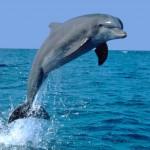 India: i delfini sono persone …