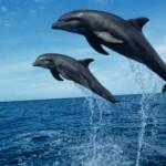 Acquario di Genova: inaugurato nuovo padiglione per la prigionia dei cetacei
