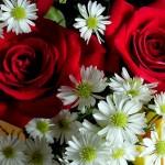 La Gioia è un fiore .