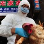 Aviaria, in Emilia i focolai salgono a tre. Individuato il virus H7N7 che preoccupa la Cina