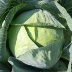 Cavolo: l'ortaggio piu' nutriente del mondo. Ecco perché