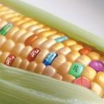 Monsanto, la Tpp e il controllo del cibo mondiale