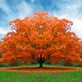 albero_autunno