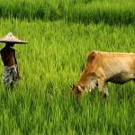 Il Bangladesh sconfigge la fame grazie alle reti locali e al microcredito