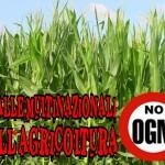 Ogm: nel 2013 (purtroppo) aumentano le coltivazioni biotech nel mondo