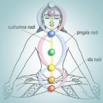 L'energia del corpo: ida, pingala e sushumna