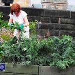Cibo gratis negli orti urbani di Todmorden