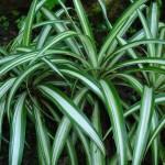 Le piante hanno memoria: apprendono e ricordano tutte le informazioni