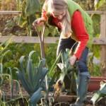 Mese di gennaio: semina, raccolto e lavori nell'orto
