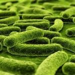 Germi e batteri: ecco i punti peggiori della casa in cui si nascondono