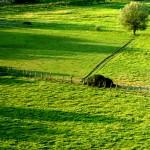 Il ritorno dei terreni agricoli