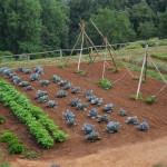 Mese di febbraio: semina, raccolto e lavori nell'orto