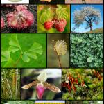 Biodiversità: perché preservarla?