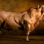 Mangiate la Carne? Mucche trasformate in MOSTRI! Ecco fin dove si è spinto l'uomo