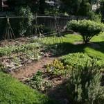 La rinascita dell'orto in un anno di grandi piogge