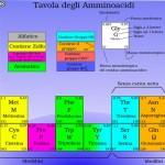 Il mito degli aminoacidi essenziali, a cura del Prof. Armando D'Elia