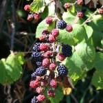 Come coltivare un frutteto in terrazzo: quali piante scegliere e come curarle
