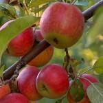 Frutteti biologici condivisi per rinnovare le aree verdi urbane