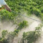 Autismo e pesticidi: nuovi studi confermano il legame