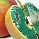 Gli alimenti Ogm sono sani?