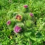 Rimedi naturali: erbe depurative e diuretiche