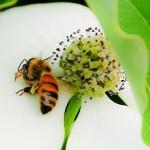 Oltre alle api, i pesticidi neonicotinoidi uccidono anche gli uccelli…