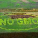 Che cosa sono gli OGM?