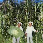 L'uomo che parla alle piante – un nuovo paradigma agricolo
