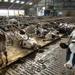 Mangiare meno carne l'unico modo per combattere veramente il cambiamento climatico. Il nuovo studio dell'Ipsos