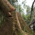 In Indonesia si continua con la deforestazione