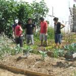 Agricoltura urbana e paesaggio