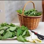 Ortica…L' inaspettata pianta dai molteplici benefici! Scopri quali e come utilizzarla!