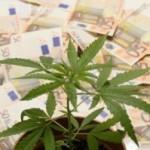 Legalizzare la cannabis in Italia porterebbe 100 milioni di risorse e 10mila detenuti in meno