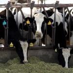 Carni e allevamenti intensivi