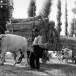 Quando in Italia si coltivava la canapa