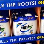 Roundup, in 66 mila firmano in Francia contro l'erbicida della Monsanto