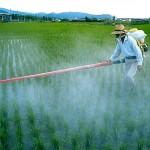 Pesticidi: siamo tutti tossicodipendenti