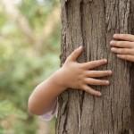 Silvoterapia: quali alberi abbracciare per sentirsi subito un po' meglio