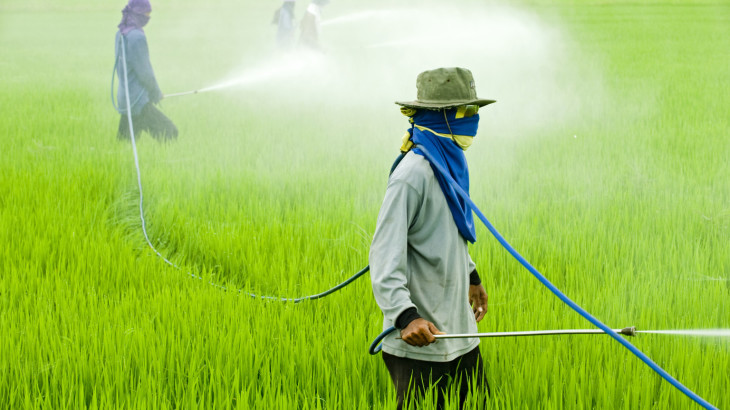 Pesticide in rice field