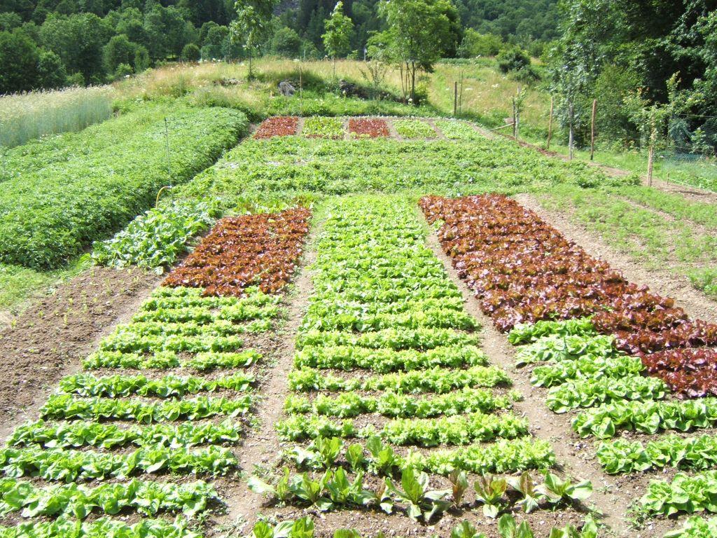 Orti e giardini cateringveg - L orto in giardino ...