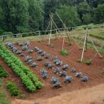 Il 40% del cibo in Russia viene dagli orti